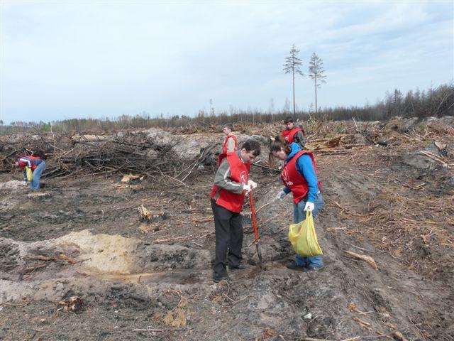 Рязанские коммунисты участвовали в посадке леса