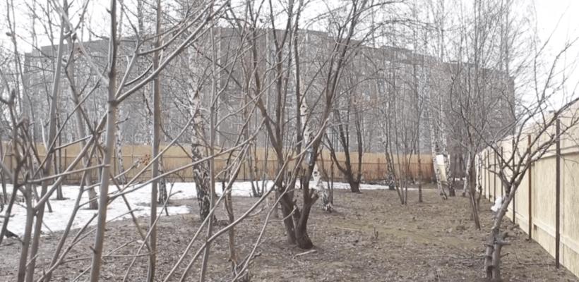 КПРФ вместе с жителями встала на защиту берёзовой рощи в Дашково-Песочне