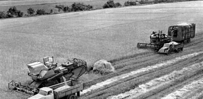 Как жили и кормили страну колхозники