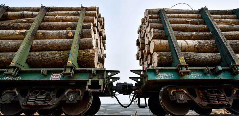 Прокремлевские пропагандисты ругают Сергея Левченко и хвалят Путина за предложение запретить вывоз леса за границу… Левченко предлагал это Путину 1,5 года назад