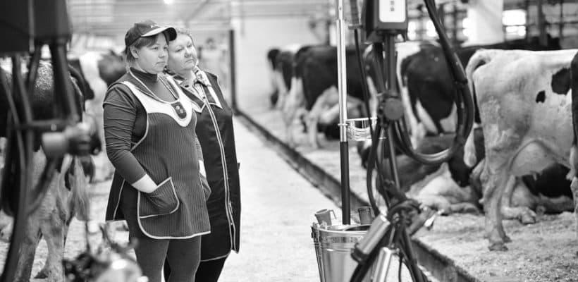 Колхозники — народ крепкий, закалённый