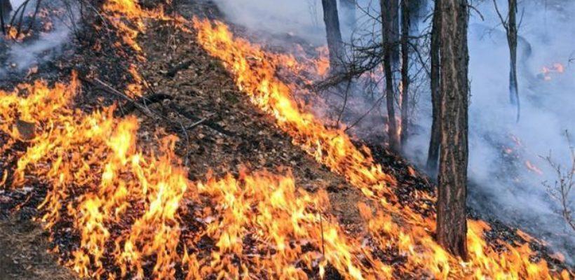 Зачем чиновники поджигают лес и страну, желая повторить ад лета-2010