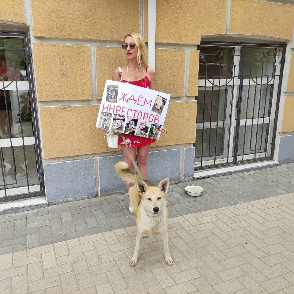 Рязанские зоозащитники вышли с одиночными пикетами к зданию администрации.